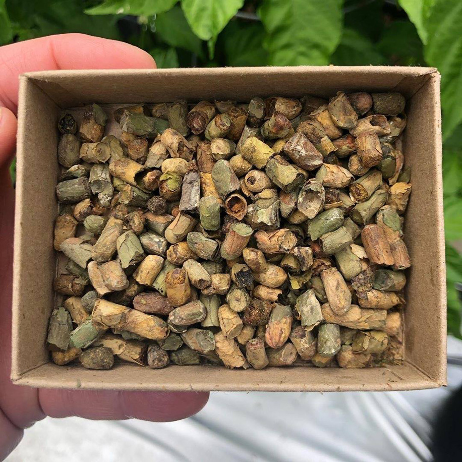 bee cocoons in a box