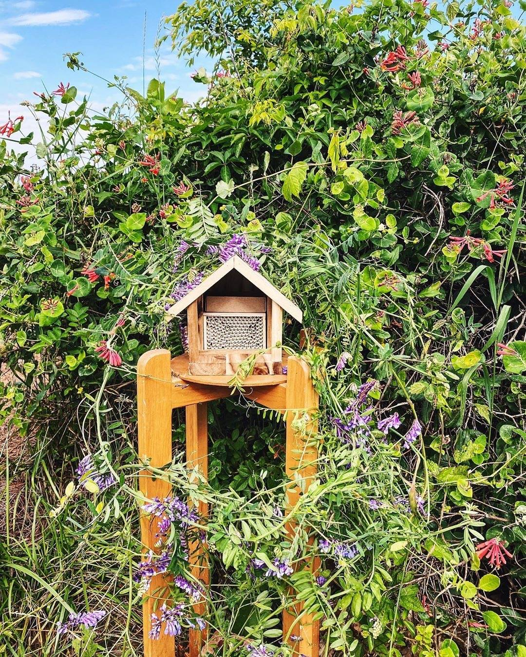 Giving Your Garden a Bee-utiful Boost